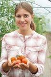 Πορτρέτο της γυναίκας γεωργικός εργαζόμενος που ελέγχει τις τοματιές μέσα Στοκ Φωτογραφία