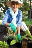 Πορτρέτο της ευτυχούς φύτευσης κηπουρών στον κήπο Στοκ φωτογραφίες με δικαίωμα ελεύθερης χρήσης