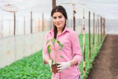 Πορτρέτο της ελκυστικής εργαζόμενης γυναίκας κήπων Στοκ φωτογραφία με δικαίωμα ελεύθερης χρήσης