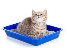 Πορτρέτο της λίγο τιγρέ κινηματογράφησης σε πρώτο πλάνο γατακιών Στοκ Εικόνα