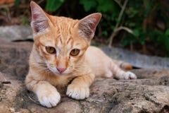 Πορτρέτο της χαριτωμένης περιπλανώμενης γάτας Στοκ Εικόνες