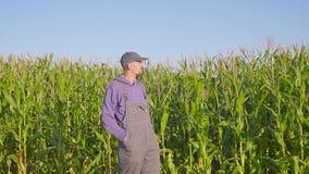Πορτρέτο της Farmer cornfield Η Farmer, κλείνει επάνω του προσώπου στον τομέα καλαμποκιού απόθεμα βίντεο