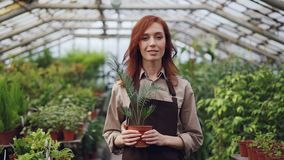 Πορτρέτο του ελκυστικού κοκκινομάλλους κηπουρού γυναικών στην ποδιά που στέκεται μέσα στο μεγάλο θερμοκήπιο και που κρατά το φυτό φιλμ μικρού μήκους