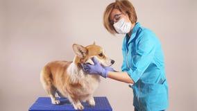 Πορτρέτο του καλού κτηνιάτρου που φροντίζει το ανεπαρκές κατοικίδιο ζώο φιλμ μικρού μήκους