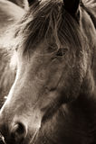 Πορτρέτο του κεφαλιού αλόγων Στοκ εικόνα με δικαίωμα ελεύθερης χρήσης