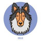 Πορτρέτο του κόλλεϊ Διανυσματική απεικόνιση στο ύφος του επιπέδου Στοκ Εικόνα