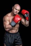 Πορτρέτο του μπόξερ με τα κόκκινα γάντια Στοκ Εικόνα