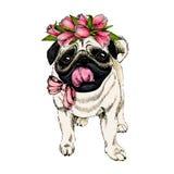 Πορτρέτο του σκυλιού μαλαγμένου πηλού που φορά την κορώνα τουλιπών Ευπρόσδεκτη άνοιξη Συρμένη χέρι χρωματισμένη διανυσματική απει Στοκ Φωτογραφία