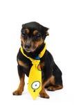 πορτρέτο του σκυλιού μόδας Στοκ Εικόνες