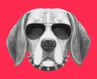 Πορτρέτο του σκυλιού λαγωνικών με τα γυαλιά ηλίου και το περιλαίμιο διανυσματική απεικόνιση