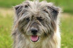 Πορτρέτο του σκυλιού Στοκ φωτογραφία με δικαίωμα ελεύθερης χρήσης