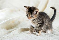 Πορτρέτο του τιγρέ γατακιού με λίγα κόκκινα σημεία και άσπρα στήθος και πόδια Στοκ Εικόνες