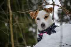 Πορτρέτο του χειμώνα Στοκ Φωτογραφίες