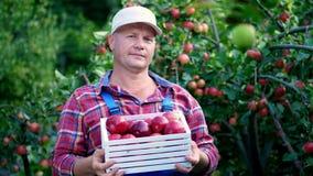Πορτρέτο του όμορφου αρσενικού αγρότη που κρατά ένα ξύλινο κιβώτιο με τα κόκκινα ώριμα οργανικά μήλα, χαμόγελο μήλα επιλογής στο  φιλμ μικρού μήκους