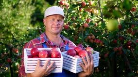 Πορτρέτο του όμορφου αρσενικού αγρότη που κρατά ένα ξύλινο κιβώτιο με τα κόκκινα ώριμα οργανικά μήλα, χαμόγελο μήλα επιλογής στο  απόθεμα βίντεο