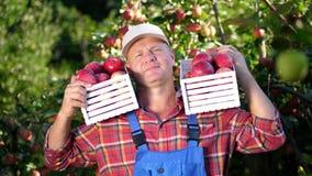 Πορτρέτο του όμορφου αρσενικού αγρότη που κρατά τα ξύλινα κιβώτια με τα κόκκινα ώριμα οργανικά μήλα, χαμόγελο μήλα επιλογής στο α απόθεμα βίντεο