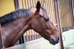 Πορτρέτο του όμορφου νέου κόκκινου αλόγου στο σταθερό κιβώτιο στοκ φωτογραφίες με δικαίωμα ελεύθερης χρήσης