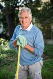 Πορτρέτο του ώριμου κηπουρού με το εργαλείο στον κήπο Στοκ Φωτογραφία
