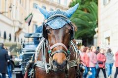 Πορτρέτο του horse-drawn αλόγου μεταφορών στοκ εικόνες