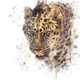 Πορτρέτο του watercolor λεοπαρδάλεων Στοκ Φωτογραφίες