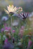 Πορτρέτο των άγριων λουλουδιών Στοκ Φωτογραφίες