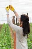 Πορτρέτο των γυναικών εργαζόμενος φυτειών Στοκ Φωτογραφία