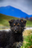 Πορτρέτο των κατοικίδιων ζώων μιας περιπλανώμενων σκυλιών έλλειψης στέγης μοναξιάς στοκ εικόνα
