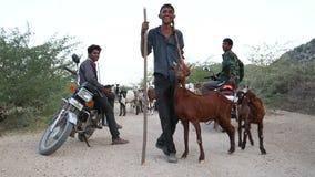Πορτρέτο των νέων φυλάκων βοοειδών στον αγροτικό δρόμο στο Jodhpur απόθεμα βίντεο