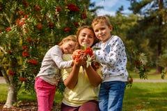 Πορτρέτο φθινοπώρου με ashberry Στοκ Εικόνες
