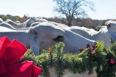 Πορτρέτο Χριστουγέννων αγελάδων Brahma Στοκ εικόνα με δικαίωμα ελεύθερης χρήσης