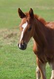 Πορτρέτο όμορφο foal Στοκ φωτογραφίες με δικαίωμα ελεύθερης χρήσης