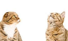 Πορτρέτο δύο γατών Στοκ φωτογραφίες με δικαίωμα ελεύθερης χρήσης