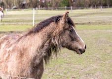 Πορτρέτο foals στο λιβάδι Στοκ φωτογραφίες με δικαίωμα ελεύθερης χρήσης