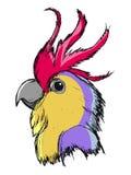 Πορτρέτο Macaw Στοκ Εικόνες