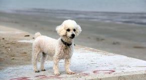 πορτρέτο s σκυλιών Στοκ φωτογραφία με δικαίωμα ελεύθερης χρήσης