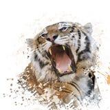 Πορτρέτο Watercolor τιγρών Στοκ Φωτογραφίες