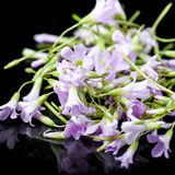 Πορφυρά εδώδιμα λουλούδια στοκ φωτογραφία