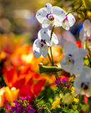 Orchids και Daffodils στοκ εικόνες