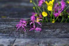 Πορφυρά και κίτρινα wildflowers Στοκ εικόνα με δικαίωμα ελεύθερης χρήσης