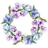 Πορφυρά και μπλε λουλούδια alstroemeria Floral βοτανικό λουλούδι Τετράγωνο διακοσμήσεων συνόρων πλαισίων Στοκ φωτογραφίες με δικαίωμα ελεύθερης χρήσης