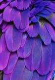 Πορφυρά και μπλε φτερά Στοκ Εικόνες