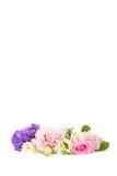 Πορφυρά και ρόδινα γαρίφαλα και τριαντάφυλλα Στοκ Φωτογραφία