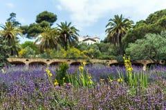 Πορφυρά λογικά officinalis Salvia και κίτρινα λουλούδια ίριδων στοκ εικόνα με δικαίωμα ελεύθερης χρήσης