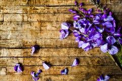 πορφυρά λουλούδια ακακιών σε έναν ξύλινο πίνακα στοκ εικόνες με δικαίωμα ελεύθερης χρήσης