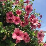 Πορφυρά λουλούδια από τις Μπαχάμες στοκ φωτογραφία