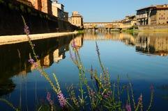 Πορφυρά λουλούδια κοντά στον ποταμό και το διάσημο Ponte Vecchio Arno στο υπόβαθρο Φλωρεντία Στοκ εικόνα με δικαίωμα ελεύθερης χρήσης