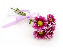Πορφυρά λουλούδια νταλιών Στοκ φωτογραφία με δικαίωμα ελεύθερης χρήσης