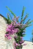 Πορφυρά λουλούδια στην άνθιση στοκ εικόνες με δικαίωμα ελεύθερης χρήσης