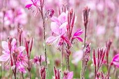 Πορφυρά λουλούδια στο θερινό πάρκο Στοκ Φωτογραφίες