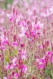 Πορφυρά λουλούδια στο θερινό πάρκο Στοκ Φωτογραφία